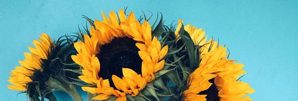 cml-tips-vitaal-zonnebloemen-vermoeidheid-medicatie-200